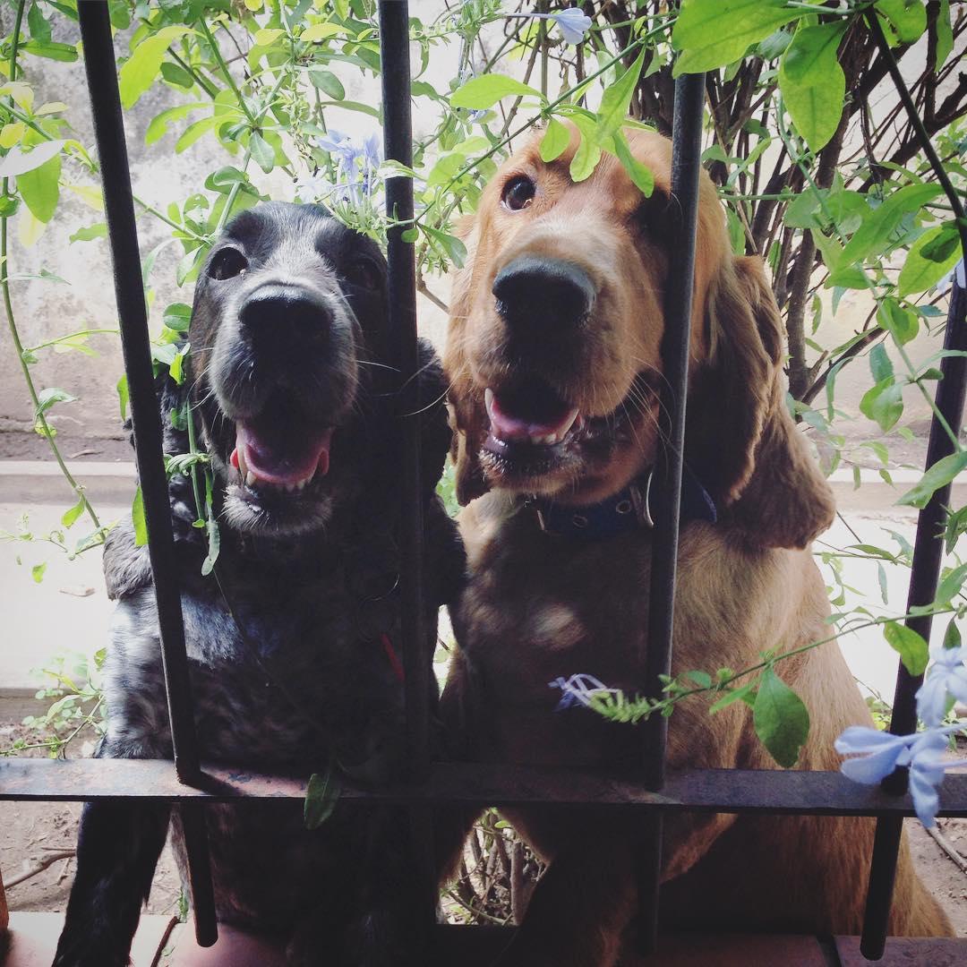 Lola & Ringo
