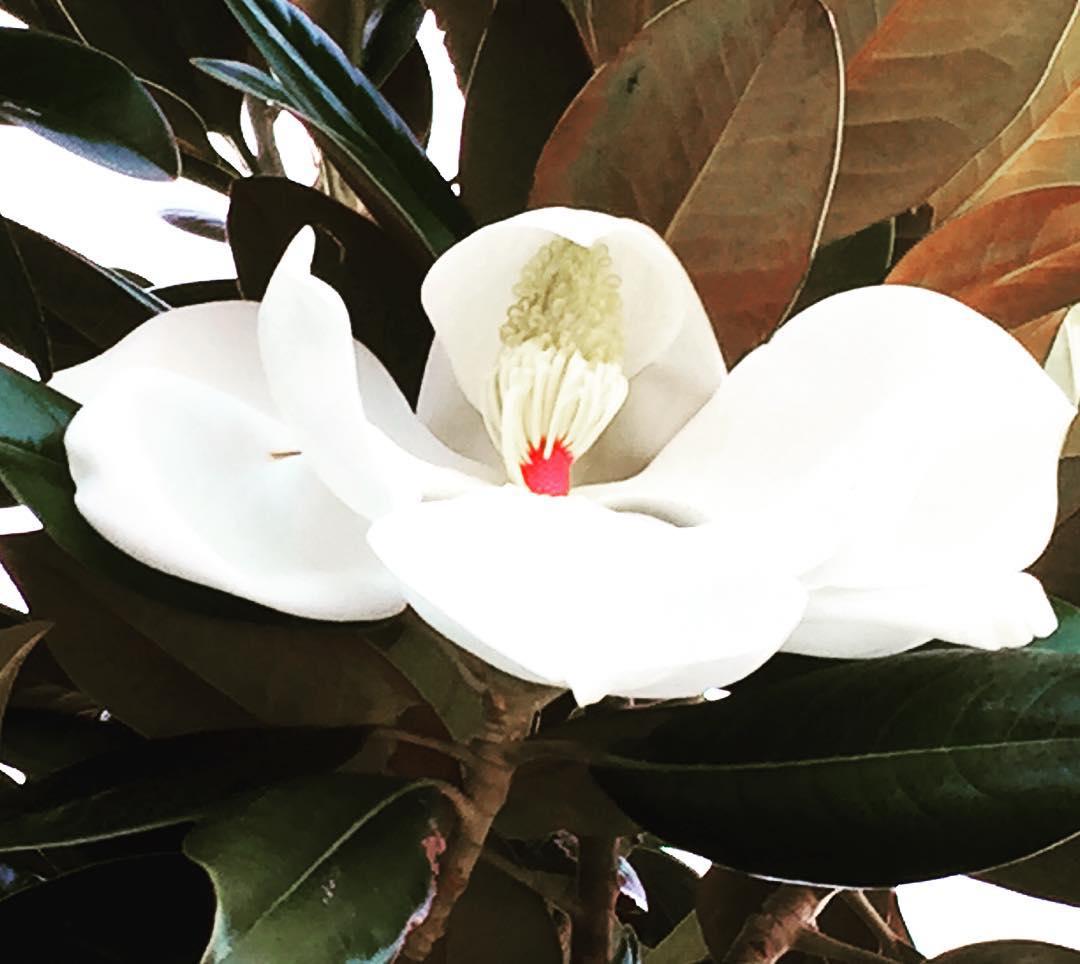 Blanco latir #florecequenoespoco #sydney #australia