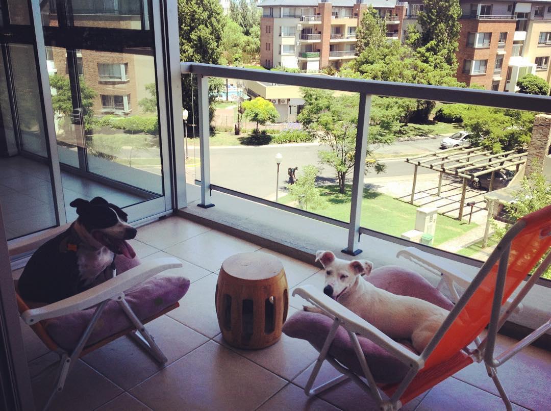 Suyay y Sansa ranchean en mi balcón