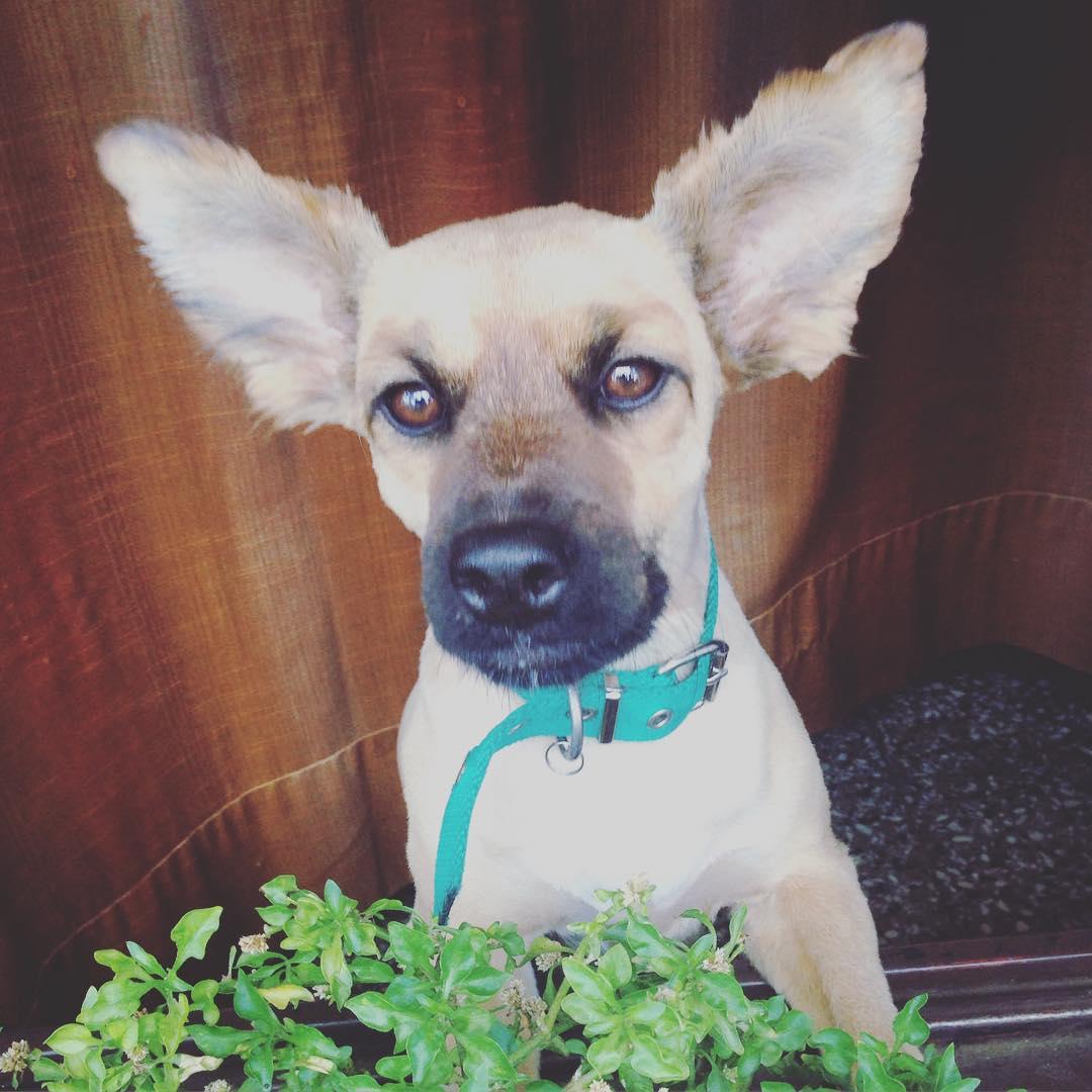 Lita #dog #pet #orejas