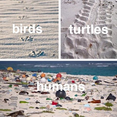 Hmmm.. Who leaves the biggest footprints?? #ocean #eco