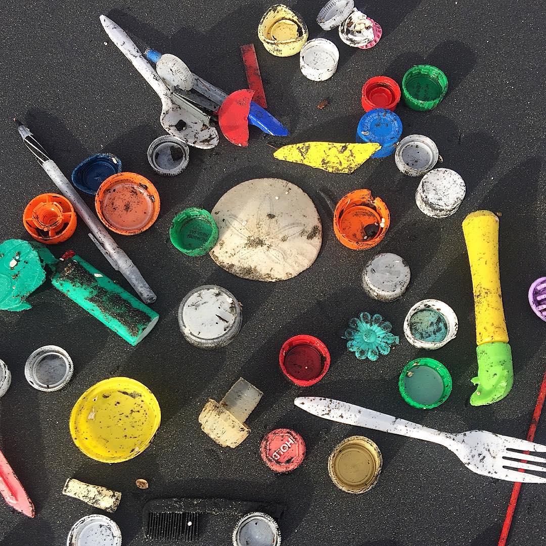 Can you find Waldo? #sanddollar #oceanbeach #solobeachclean #plasticsucks @riseaboveplastics