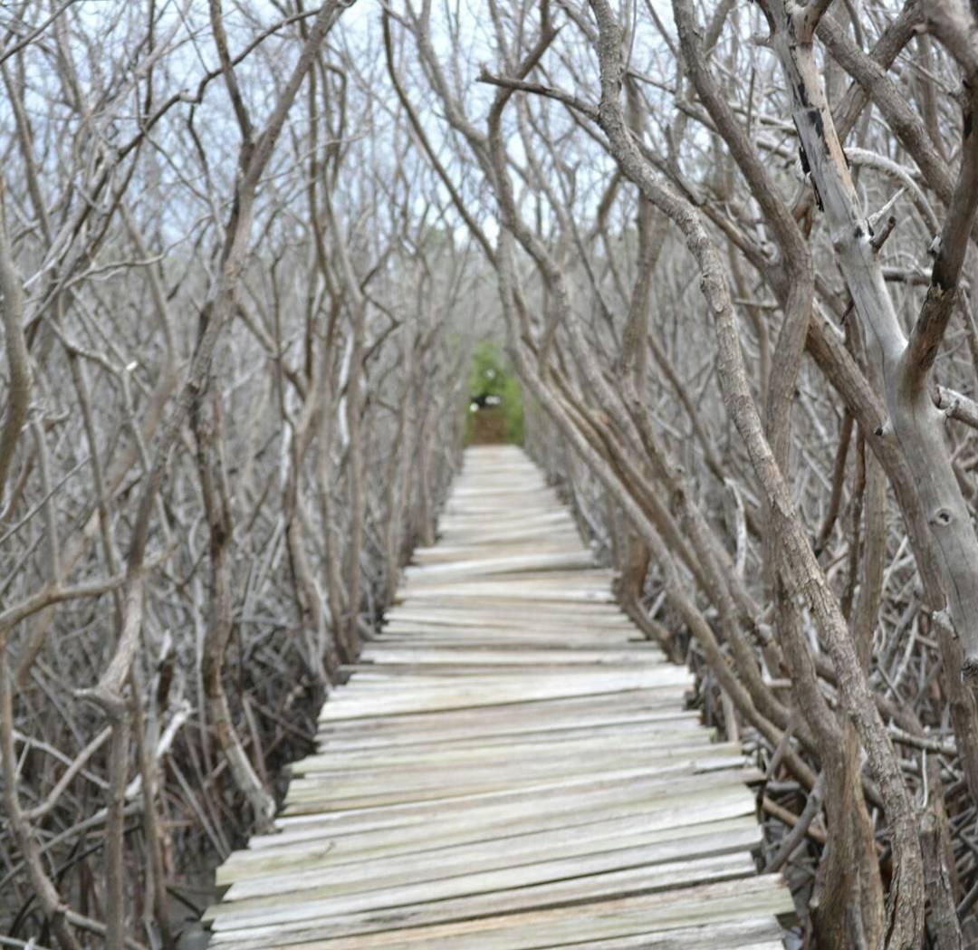 Este es el camino... anden en el. Camino que une la playa avellana con el estero. Audaz pero hermoso el lugar y su gente.  #estero #estaes_america #costarica #descubrecostarica #americacentral #avellana #playaavellana #earthpix #seco #arte_of_nature...