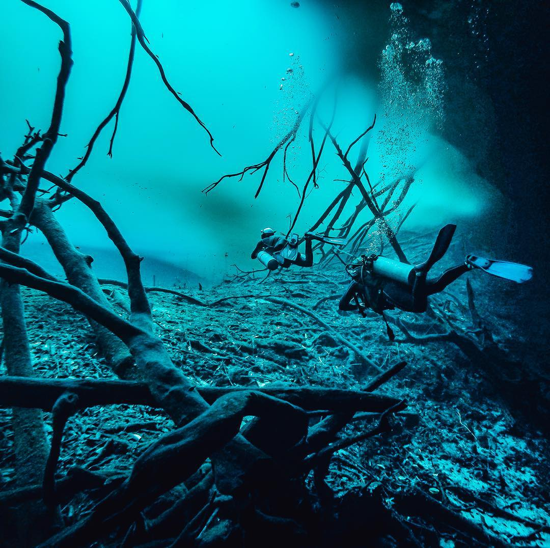 Nicolas Thiou dives in the cenote (where a subterranean body of water meets the surface) #AktunHa in Mexico. The jungle above formed the green tannic acid cloud, creating the spooky scene! #GoPro #Dive #Scuba