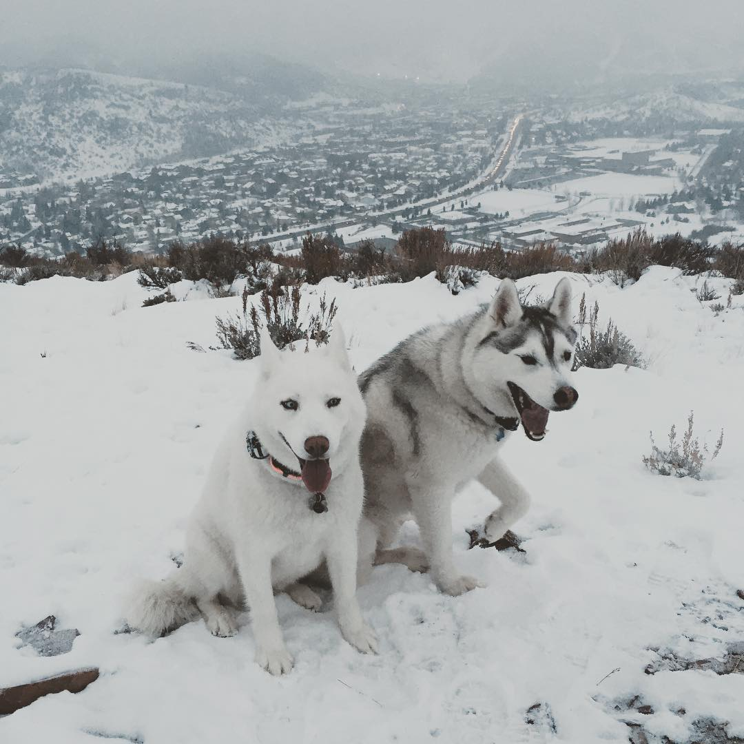 My winter training partners. They rule. #furrysnowbeasthike #ParkCity #huskylife #BentleyChickenFingersBlock #YukiTheDestroyer