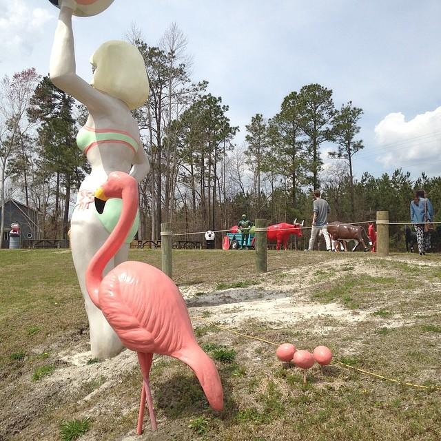 Giant fiberglass flamingos are awesome!  #wilmingtontrip #flamingo #awesome @valdostawakecompound y'all need these!