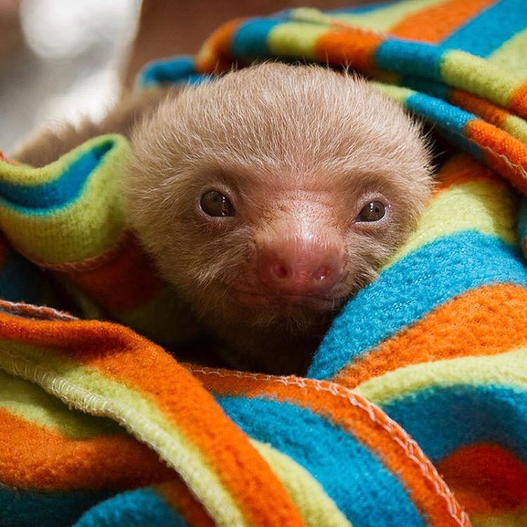 This #sloth has the right idea.