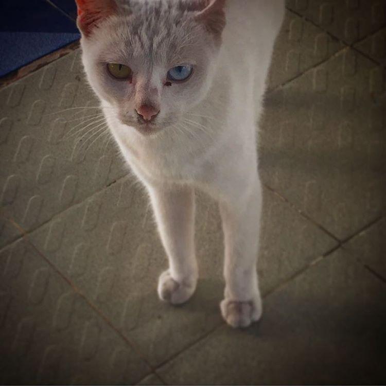 Convivencia del color! #cat #trippingmood #mandalay #myanmar