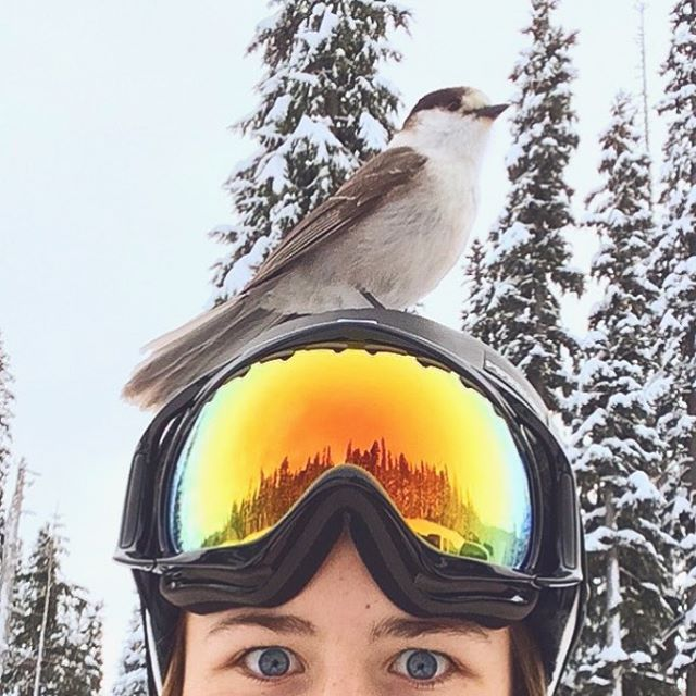 Who do you ride with? PC: @kirra.kirra  #sisterhoodofshred #bird #skiing #snowboarding #snow #winter #mountains #friends