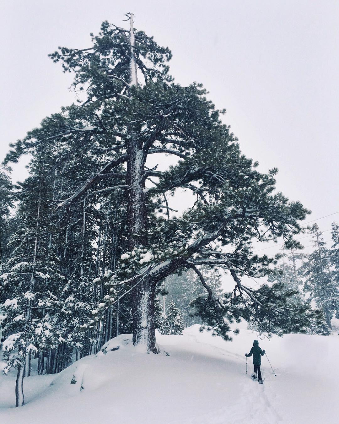 Snow dance ❄️ #CA89 #takeapeak