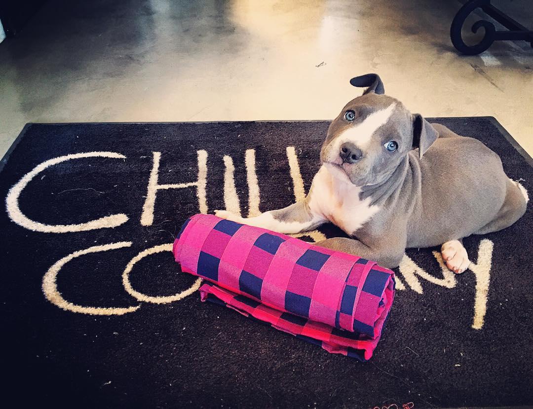 Hoy estamos hasta las 20hs en los dos locales.  10% de descuento si venís con tu mascota.  Araoz 2564, Palermo. Segundo Fernandez 91, San Isidro.  #ChillingCompany #PetFriendly #Puppy