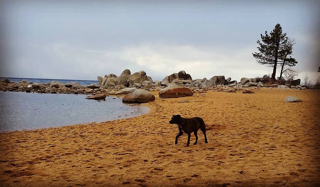 We had the #beach all to ourselves. #pups #getoutside #whatsyour20 #tahoesnaps #tahoesouth #graniterocx