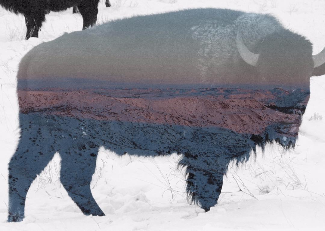 Not your typical sunset photo, courtesy of ASC Landmark crew member Deniz Bertuna. @americanprairie #ASCLandmark #bison #doubleexposure