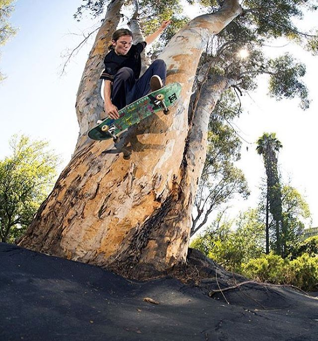@tfunkb getting in touch with nature. Tree wallie. Photo: @blabacphoto #TFunk #DCShoes