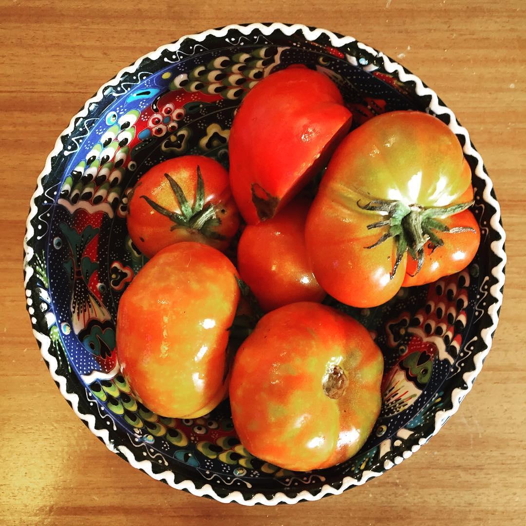 De la huerta directo al corazon! #florecequenoespoco #tomate GRACIAS #prohuerta