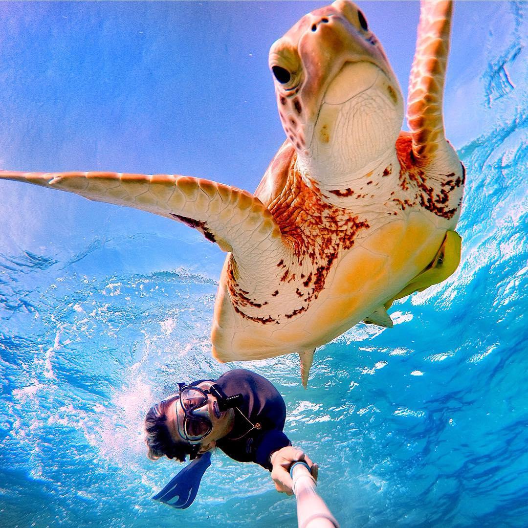 Free diving in the Bahamas. Photo: @ameliaklonaris GoPro HERO4 | GoPole Reach #gopro #gopole #gopolereach #bahamas #