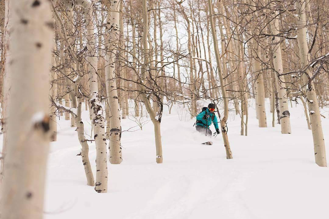Gliding through the aspen glades | PC: @nilesan