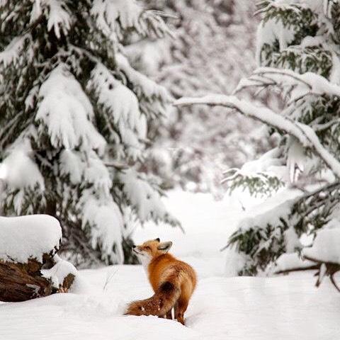 Hey, foxy #Friday #AllSwell