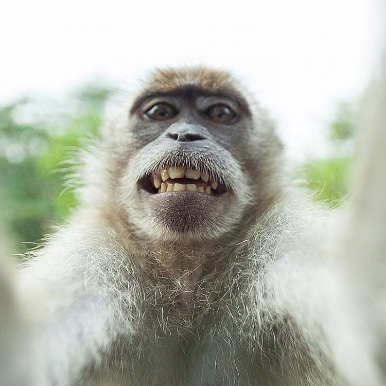 This monkeys #selfie game is stronger than ours is and will ever be.