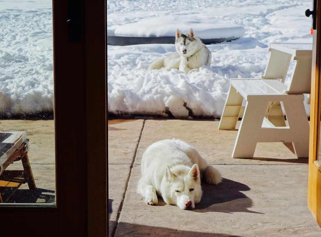 Sunday afternoon Husky vibes. Yuki and Bentley lounging around on a sunny afternoon at our home here in #ParkCity, after a long day of chasing stuff, hiking and play fighting. #sundayvibes #snowdogs #mountaintownlife #YukiTheDestroyer...