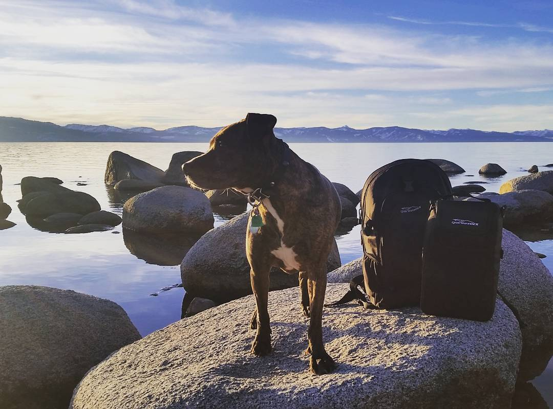Early morning trip to the lake with the pup and Tahoe pack/cooler. #pups #peacefulmornings #laketahoe #getoutside #backpacks #coolers #graniterocx