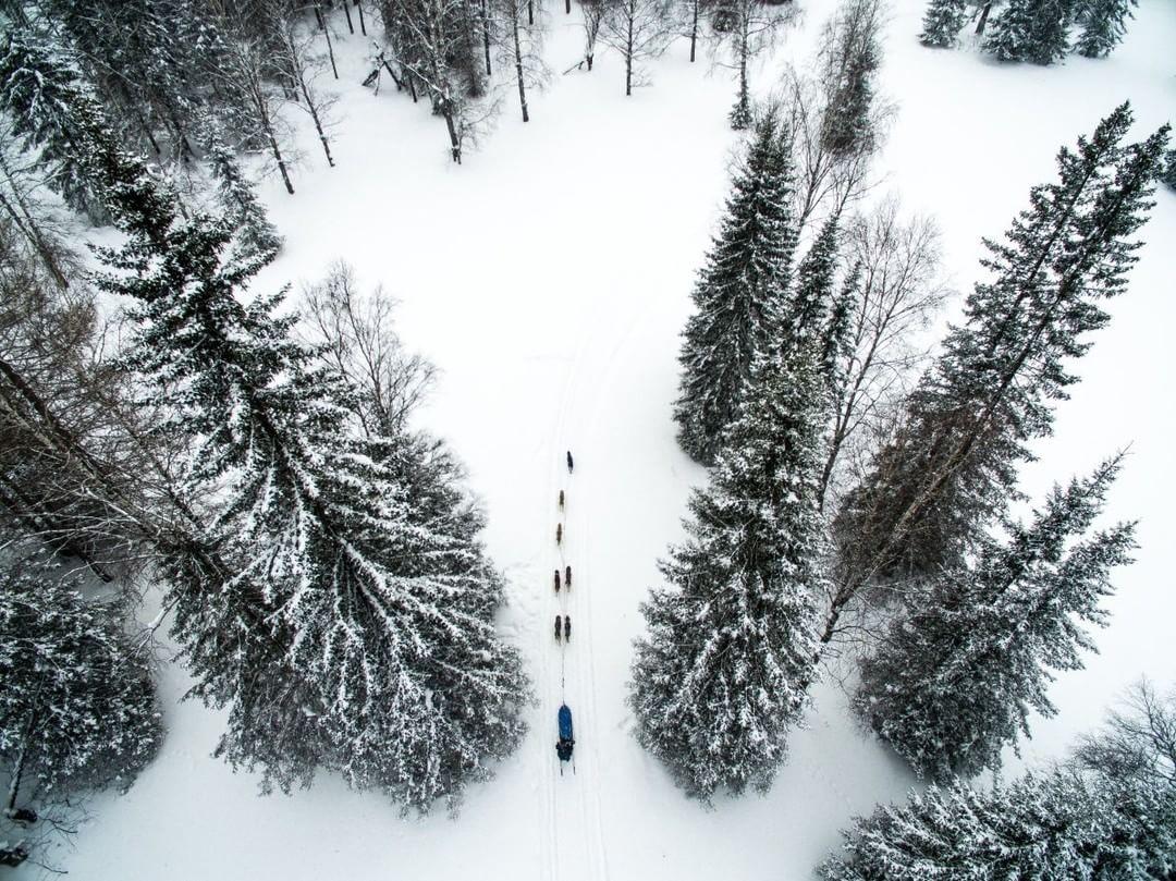 Find your way through the forest  Credit: Maksim Tarasov | #Phantom #DogSledding #Russia