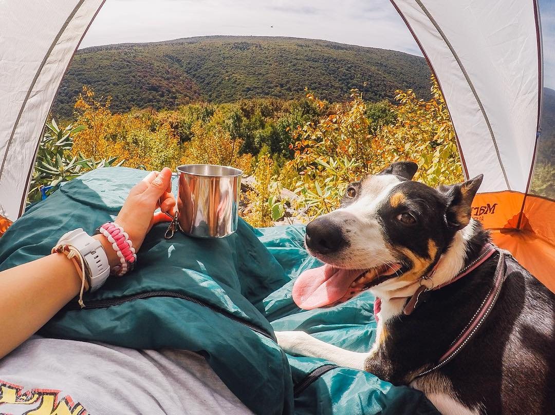 Photo of the Day! @goprogirl (love the username!) has just converted @lifeandlucy into a happy camper. Sharing your passions with your pets? Show us via #GoProAwards link in our bio. #GoProGirl