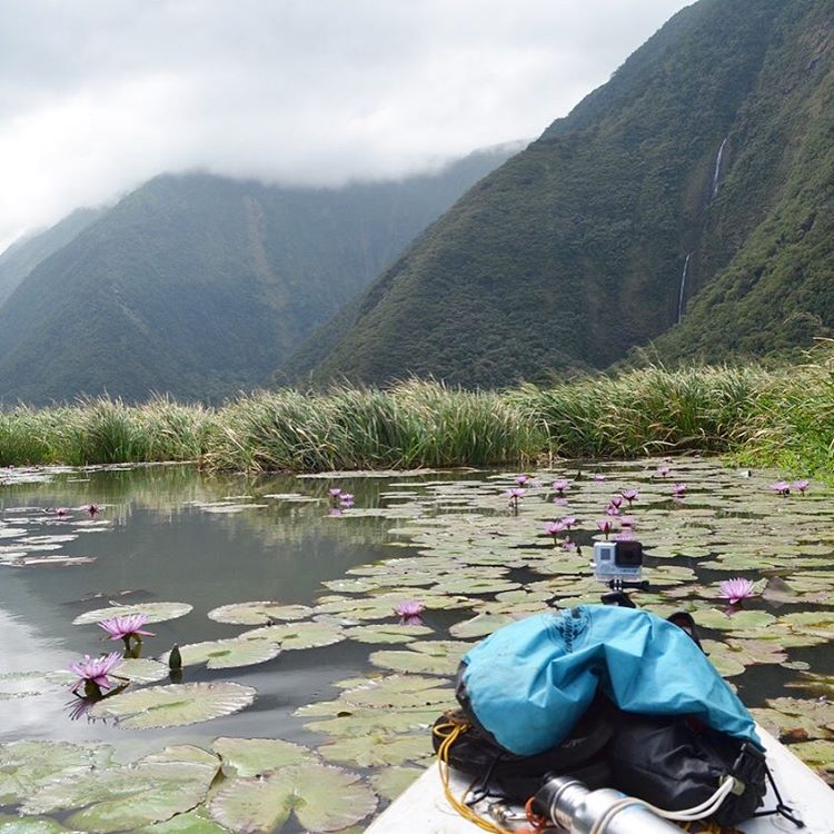 60lb packs. Inflatable SUPs. 22 miles. 5,800 vertical ft. Epic trip by @plastictides to sample for ASC microplastics in a remote valley on Hawaii's Muliwai Trail. Did we mention they foraged for 50% of their food?