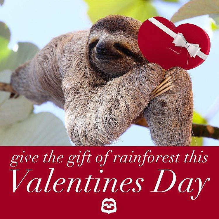 Still need to get a gift? Skip the chocolate and flowers this year.  #SaveRainforest #Cuipo #ValentinesPresent #SlothSunday #Vday2016
