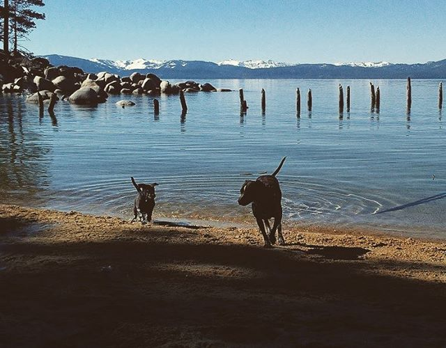 Happy Presidents Day from all of us at Granite Rocx! #presidentsday #pups #laketahoe #whatsyour20 #getoutside #graniterocx