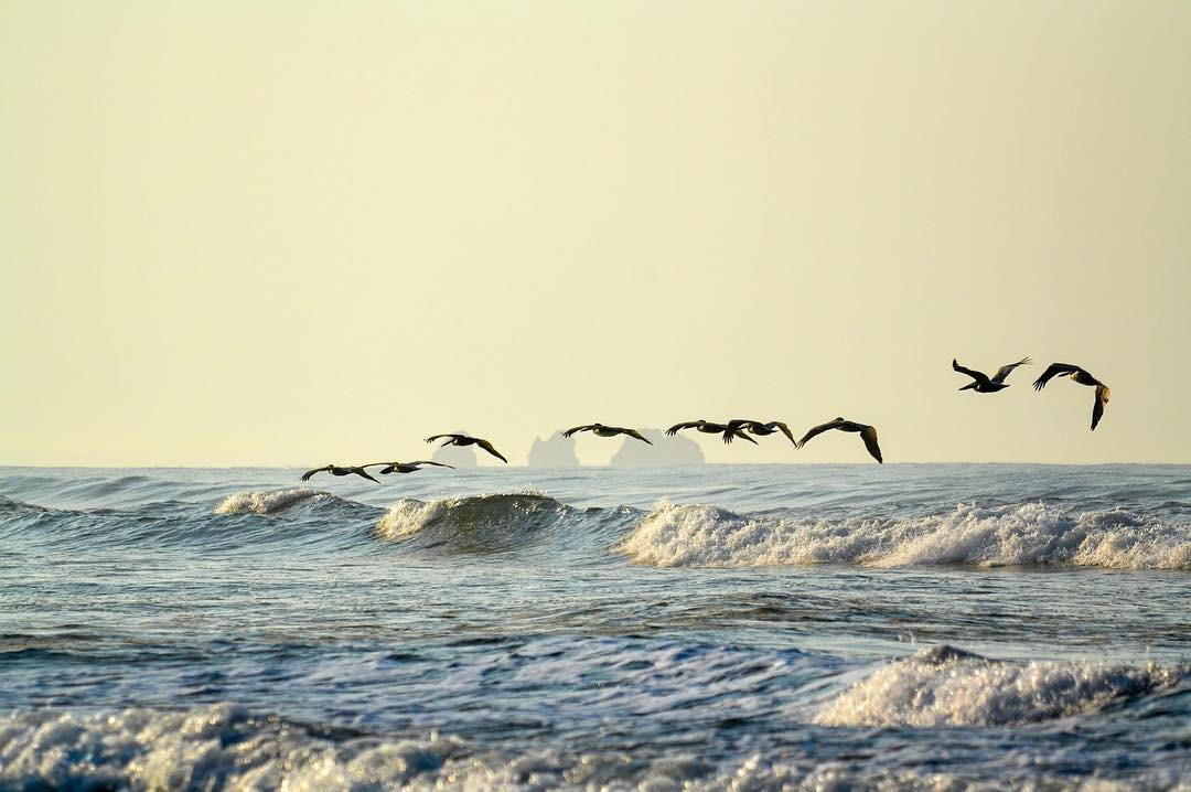 How about sharing an early morning surf with a couple of pelicans on a #MotherNatureMonday ?