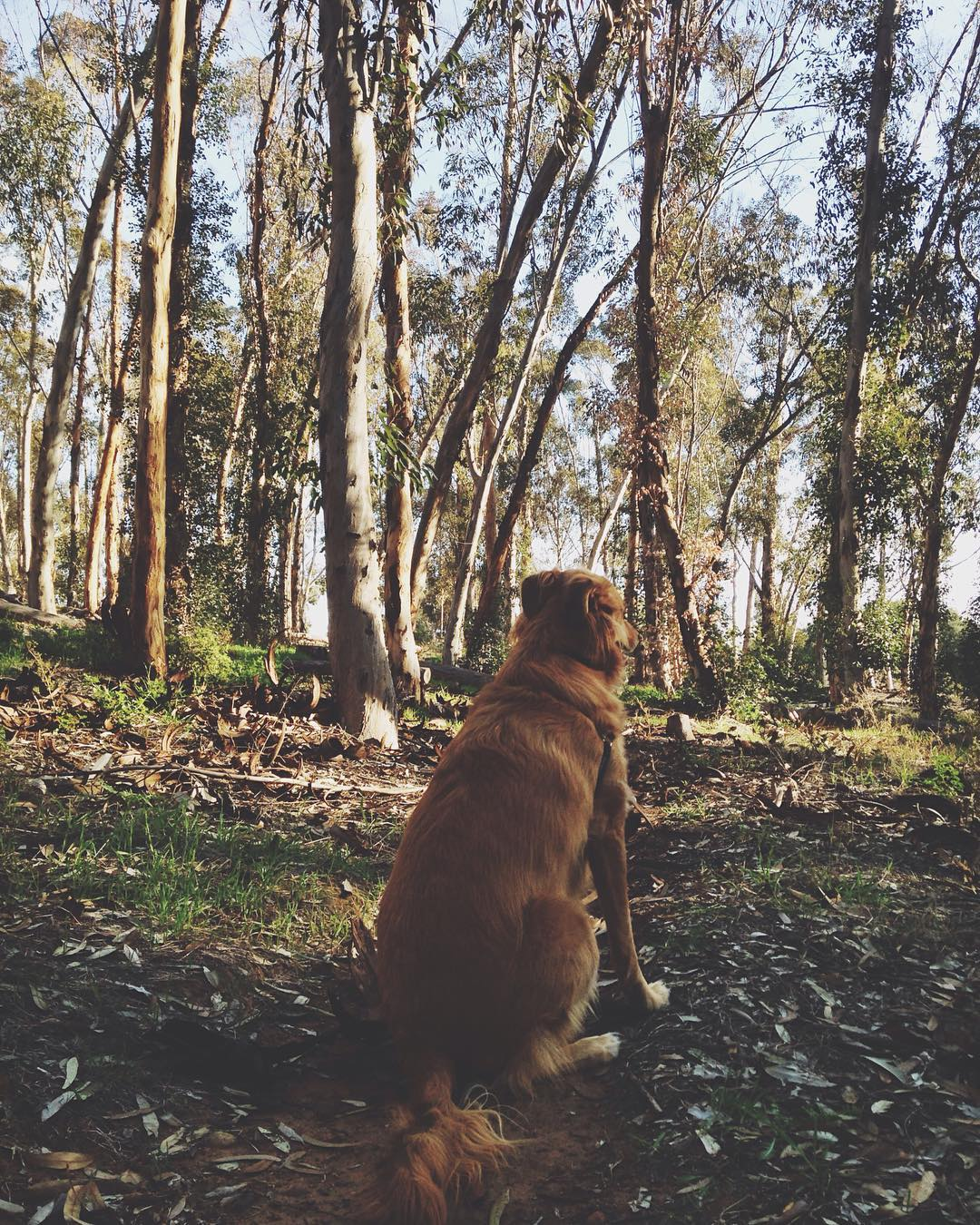 ~ Into the Wild ~  Explore often, adventure consciously.  Byron the Intern finding solitude amongst the trees. ---------------------------------------- #bekindvibes #bekindtribe #consciousadventurer #byrontheintern
