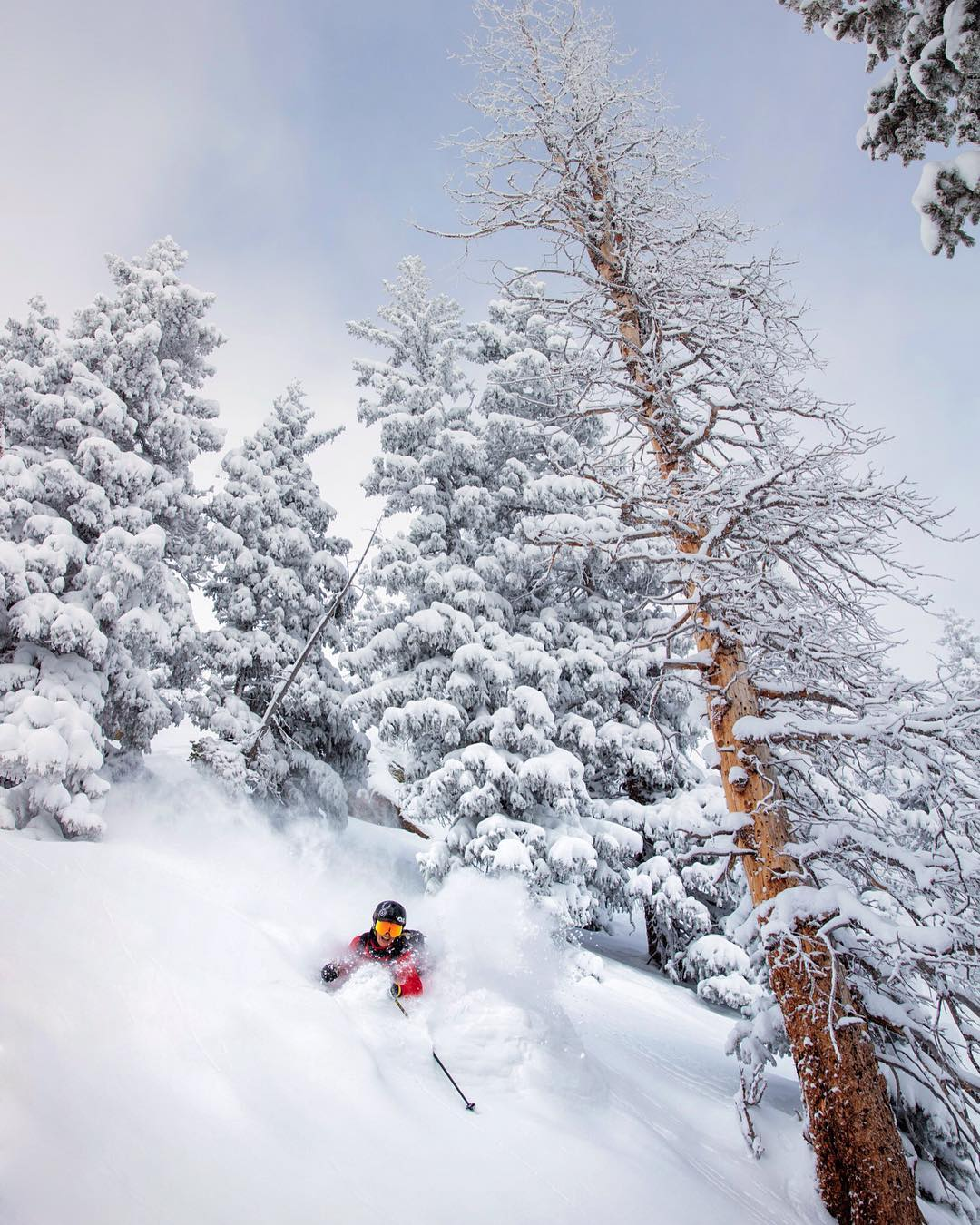 Is there a better feeling then shredding waist deep powder through the trees?