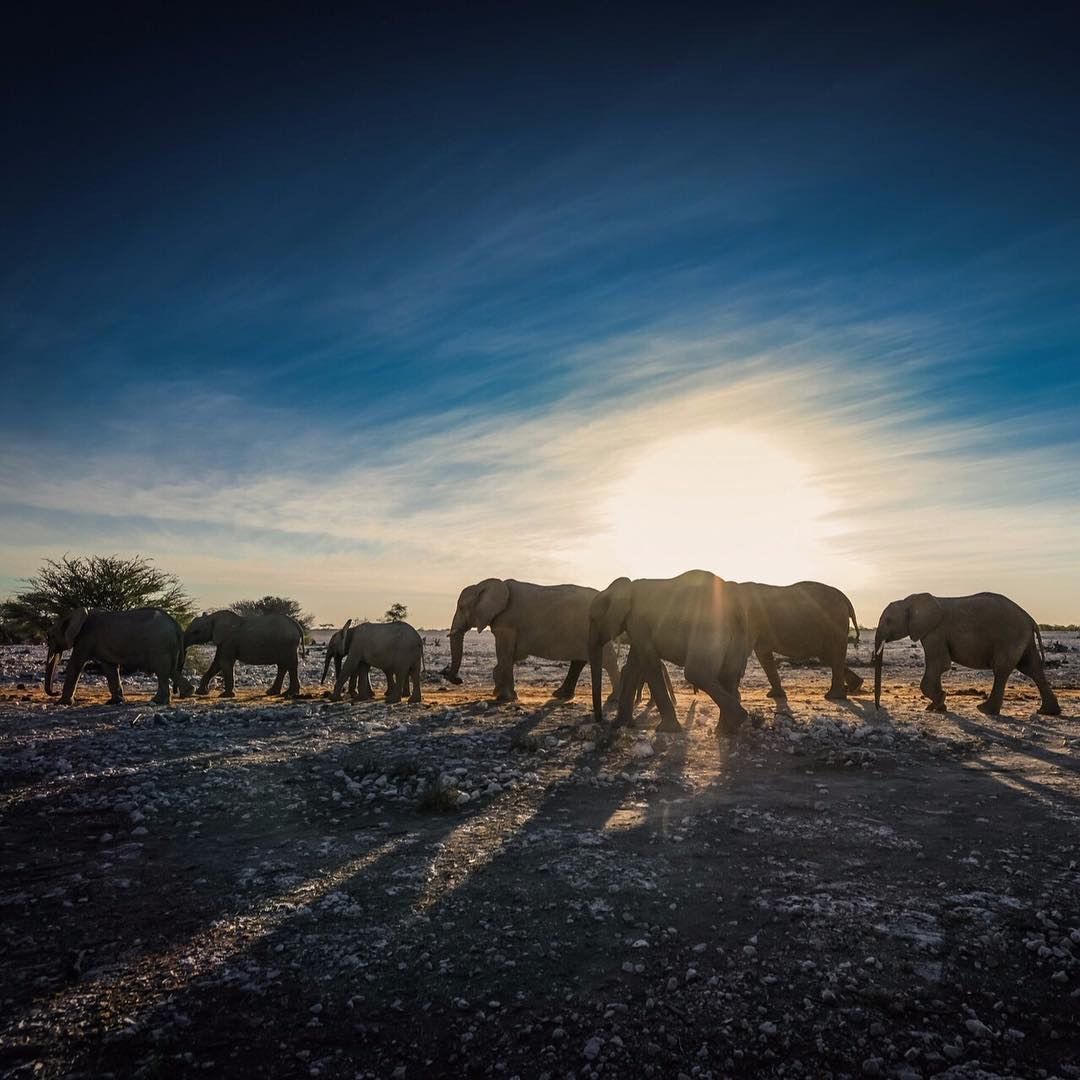 Elephants in Namibia heading into the watering hole for din-din.  Photo by @lockettphotos. #namibia #honeymoon #peakdesign