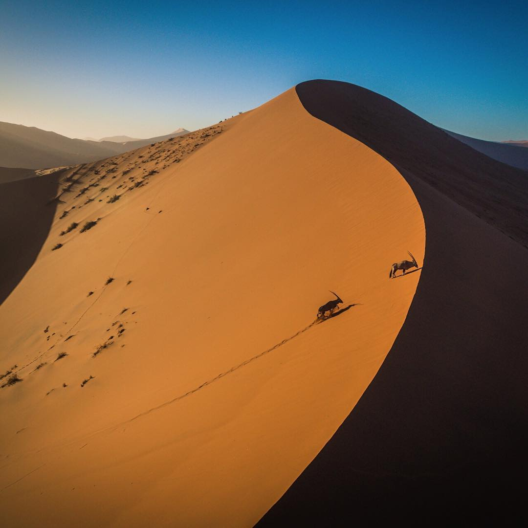 @lockettphotos and @rniederman awoke in their camper cocoon to race the sun to Dune 45. They climbed up its silky orange crest and as they got to the top, these two #Oryxes did the same.  Photo by @lockettphotos. Location: #Sossusvlei, #Namibia....