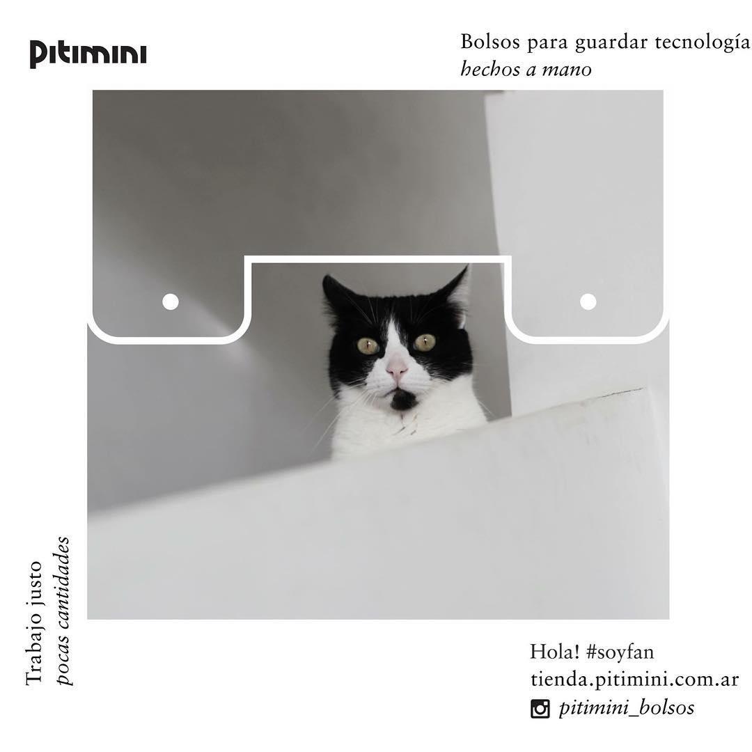 #Adela es parte de la comunidad #Pitimini Y es el 3er miembro de #BunchuEstudio #cat ph @valemarkulin cc @arielicab @soledadsuarez