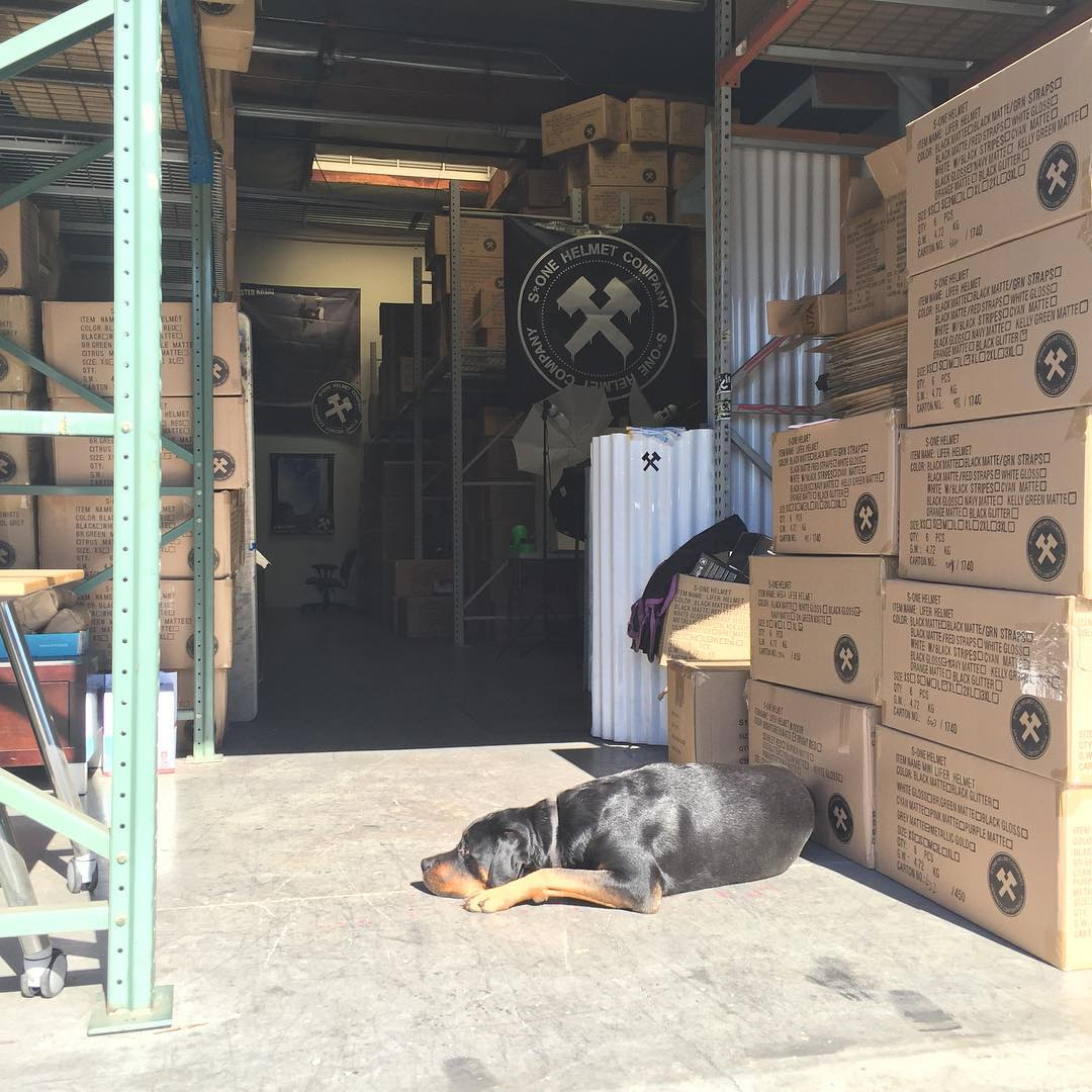 If I could only train him to pack orders or do some paper work ! #dogslife #warehouselife #s1helmets