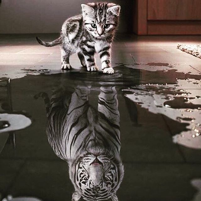 Be fierce, lil tigers! What we think we become. #mondaymantra #inspo #getafterit #jointheadventure