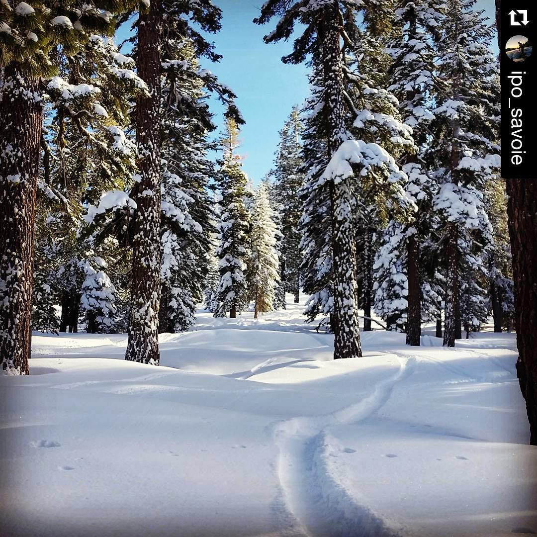 #amazingweekendsnowboarding #tahoe @ipo_savoie #snowboarding @skinorthstar #thrivesnowboards #treeriding #explore