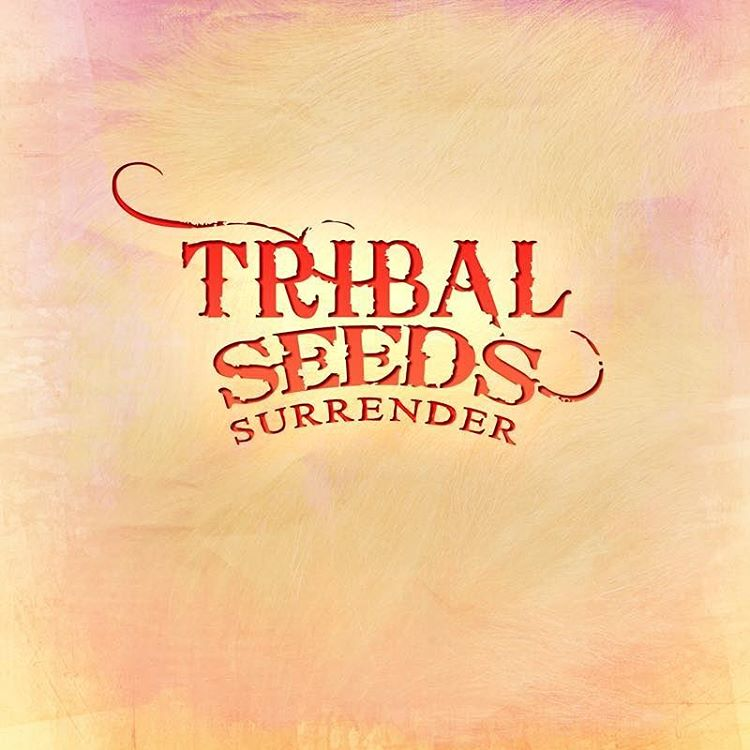 Quedo preciosa esta nueva cancion. No se les olvide descargarla el 12 de Febrero. Corran la voz. This new song by Tribal Seeds is as a sweet nectar. Don't forget to download it February 12th. Spread the word. #tribalseeds #rootsreggae #california...