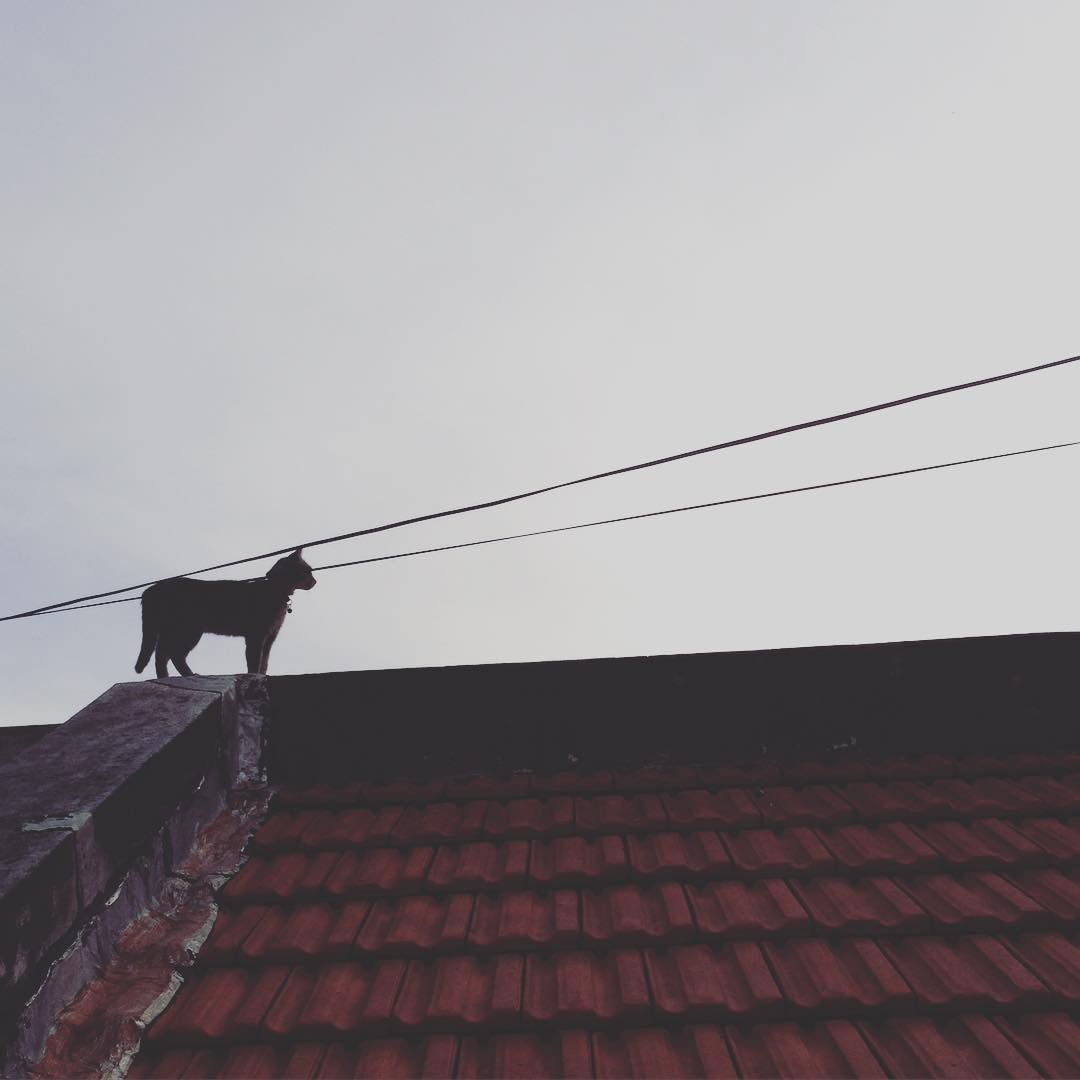 Miau #cat #miau #gata #tejados