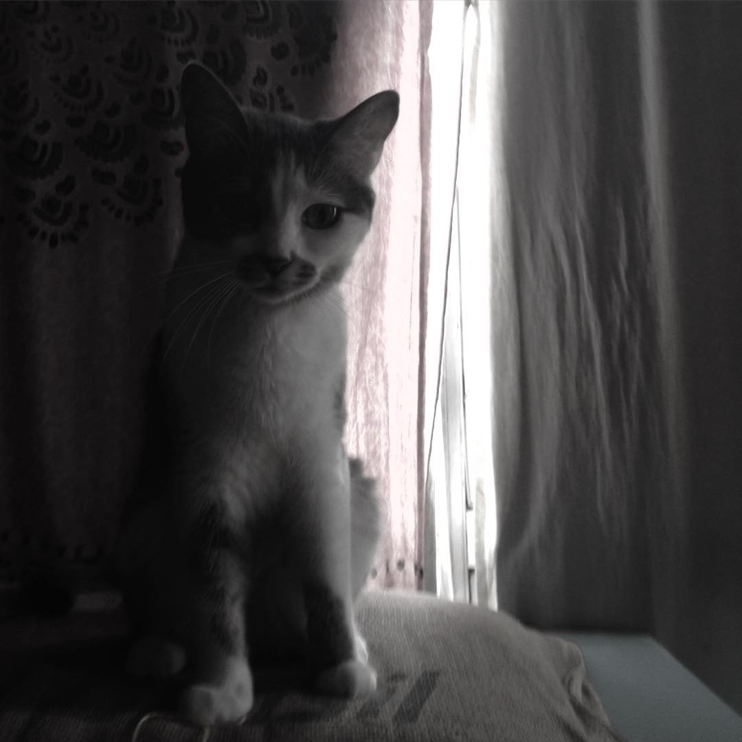 Soda ⭐️ #cat #soda #gata #amorgatuno #miau
