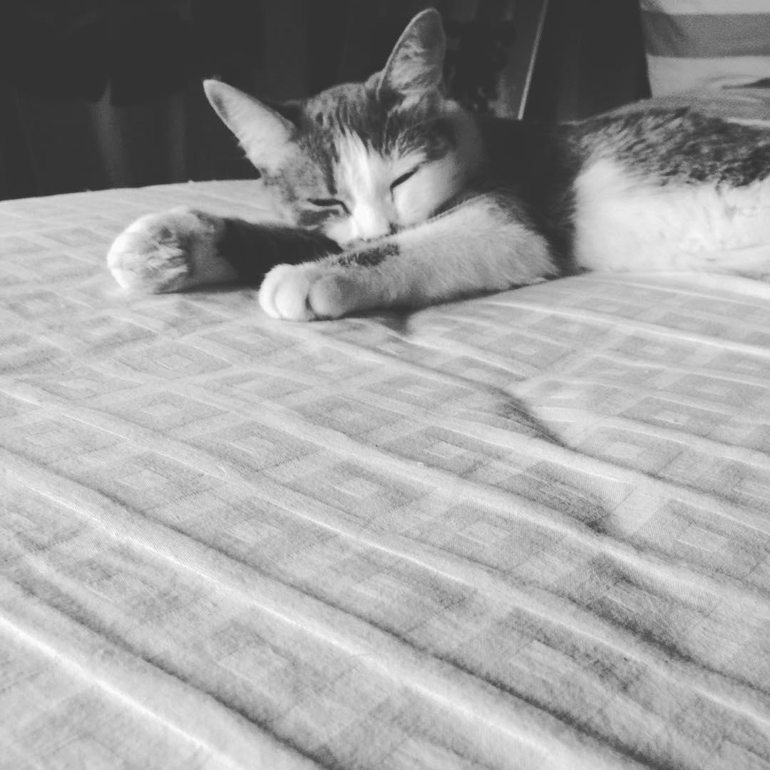 SueñoStereo #amorgatuno #soda #gata #cat #kittensofinstagram #catlovers