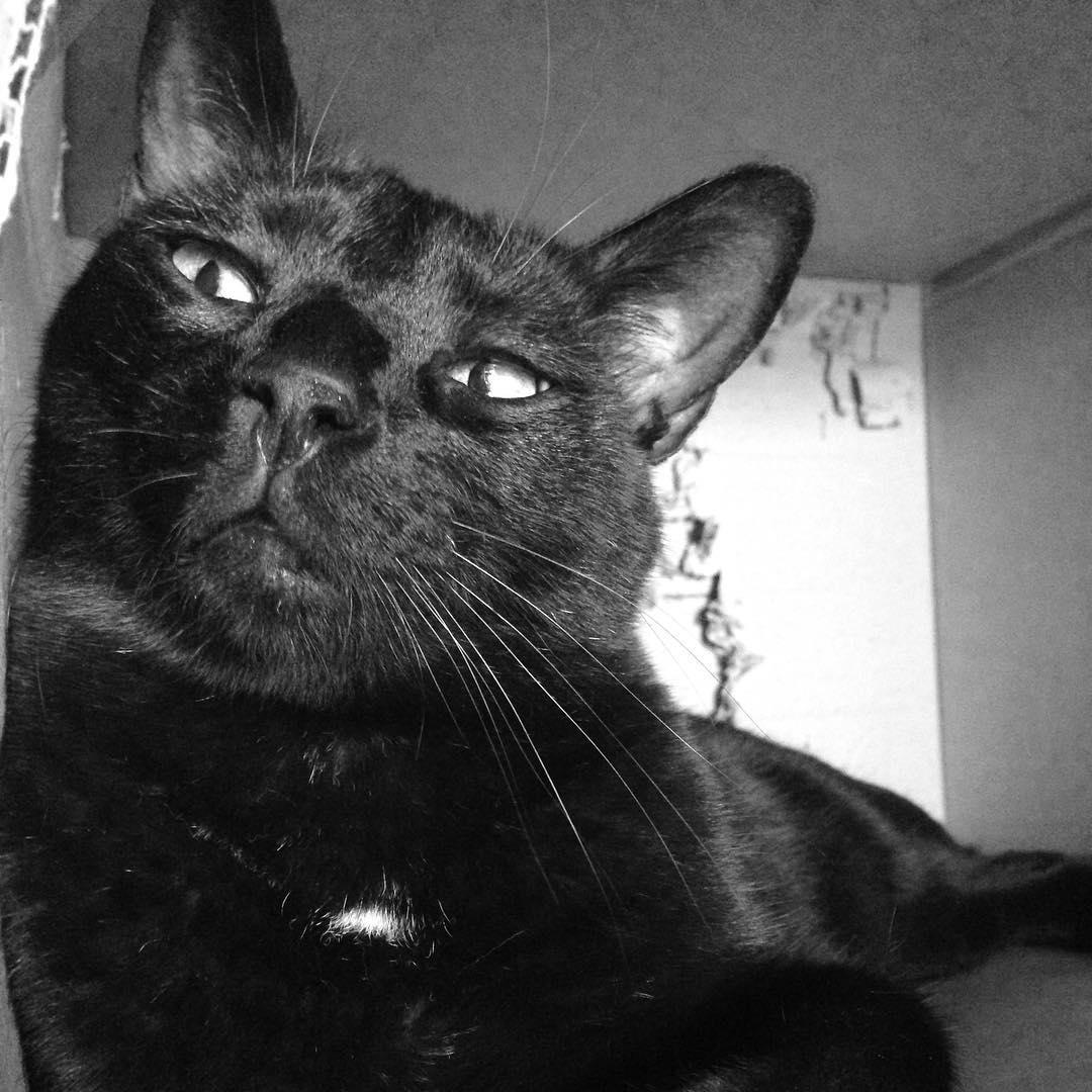 Bigotes ❤️ #cat #Black #gatonegro #amorgatuno #tinto