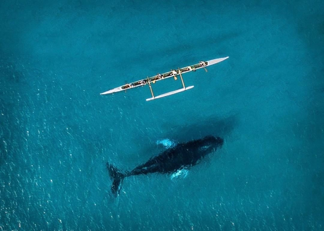 Humpback in Hawaii  Credit: Scott Strimple | #Phantom #Whale #Maui  Use #IamDJI to share your aerial creations with us!