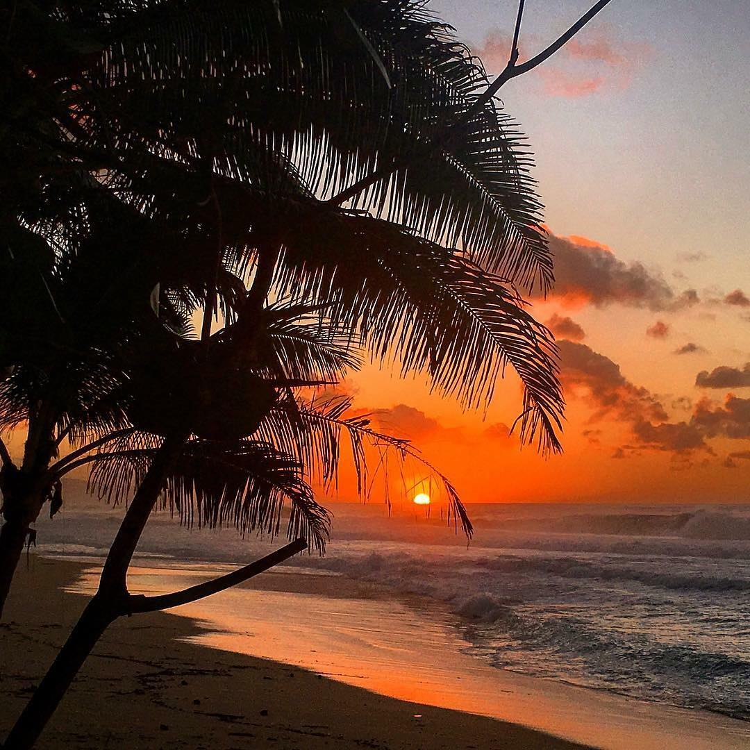 Colors of the North Shore || photo @shieldze1025 #nectarlife