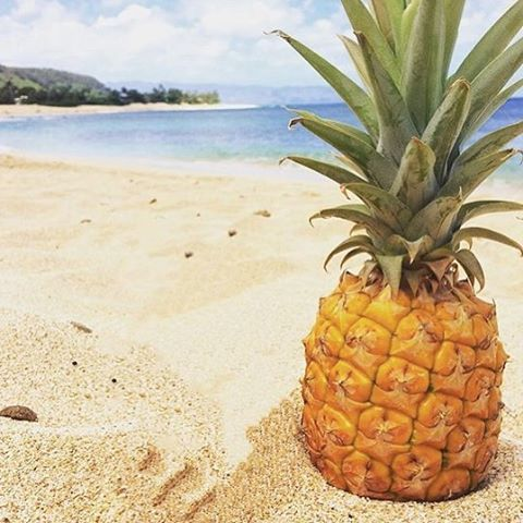 BEACHES & PINEAPPLES #hawaiibound Our #OKIINO team is super stoked to head to The North shore next week for @wanderlustfest , adventures & surf!  WHO'S GOING?  #happyfriday #pineapple #beachdays #fruityfriday #wanderlust OKIINO.com