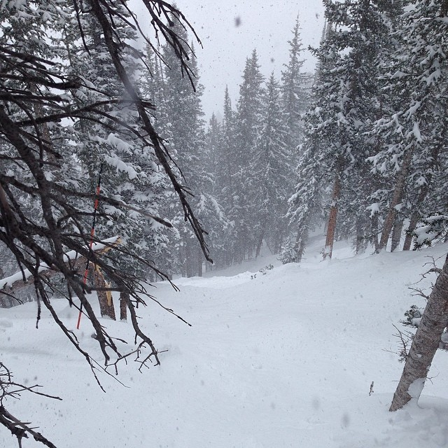 Late season pow days are the BEST!!! Who is out skiing today? @altaskiarea