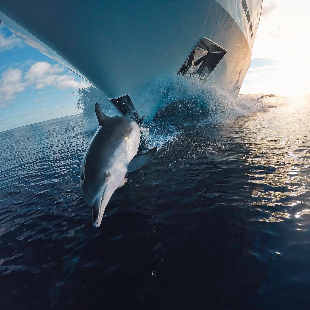 Photo of the Day! We saw @dylan.h.jones #GoProAwards submission and we knew he had a banger from the start! Congrats Dylan! Get in on cash rewards via link in our bio. #GoPro #Dolphins #