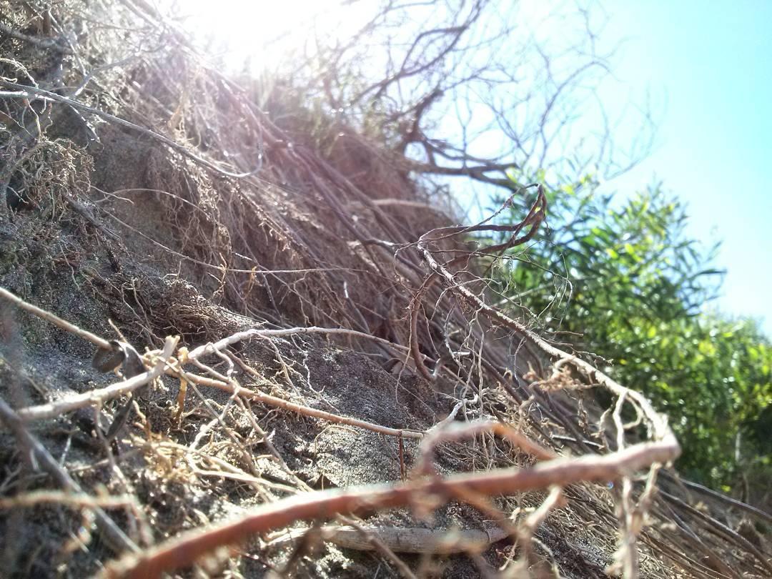 Pequeños paraisos terrenales al alcance de la cámara. #ph #detalle #details #beach #nature #nuevaatlantis #medano #raices #mevuelvoloca